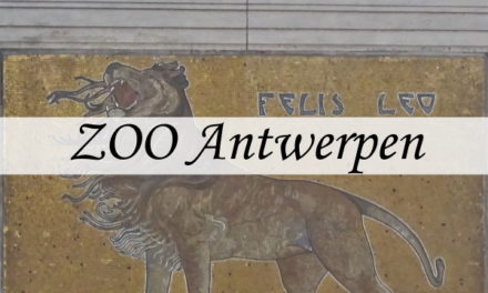 Zoo Antwerpen, een dierentuin in het midden van de stad