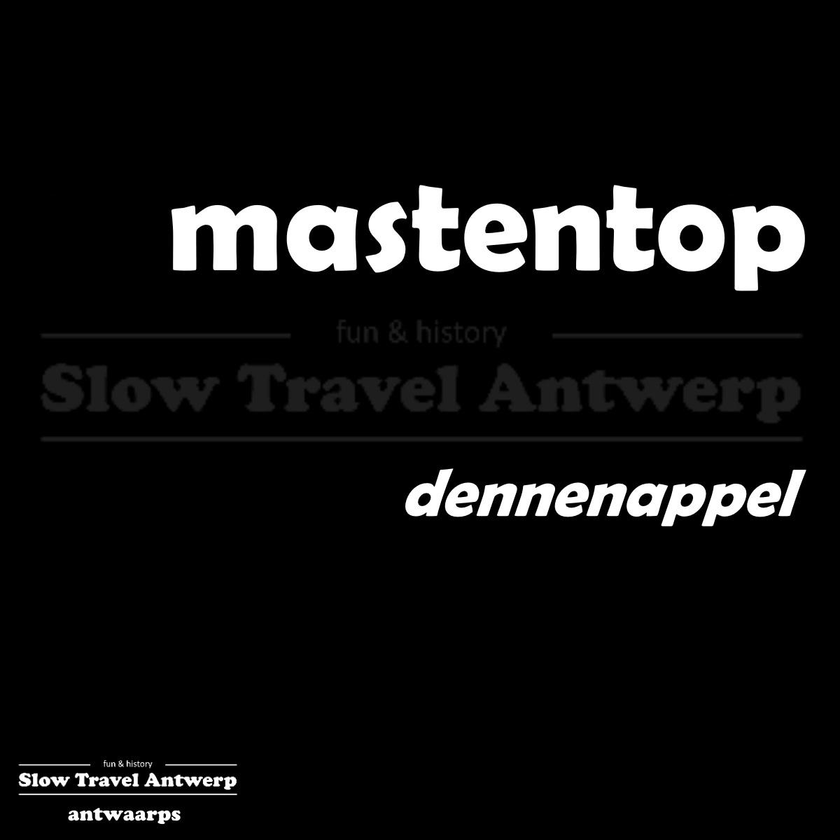 mastentop – dennenappel – pine cone